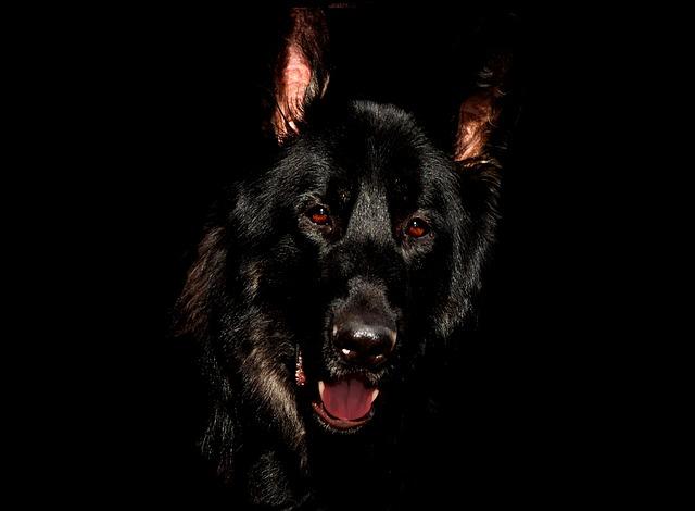 タイで狂犬病治療を即受けないと絶望という事実に驚愕