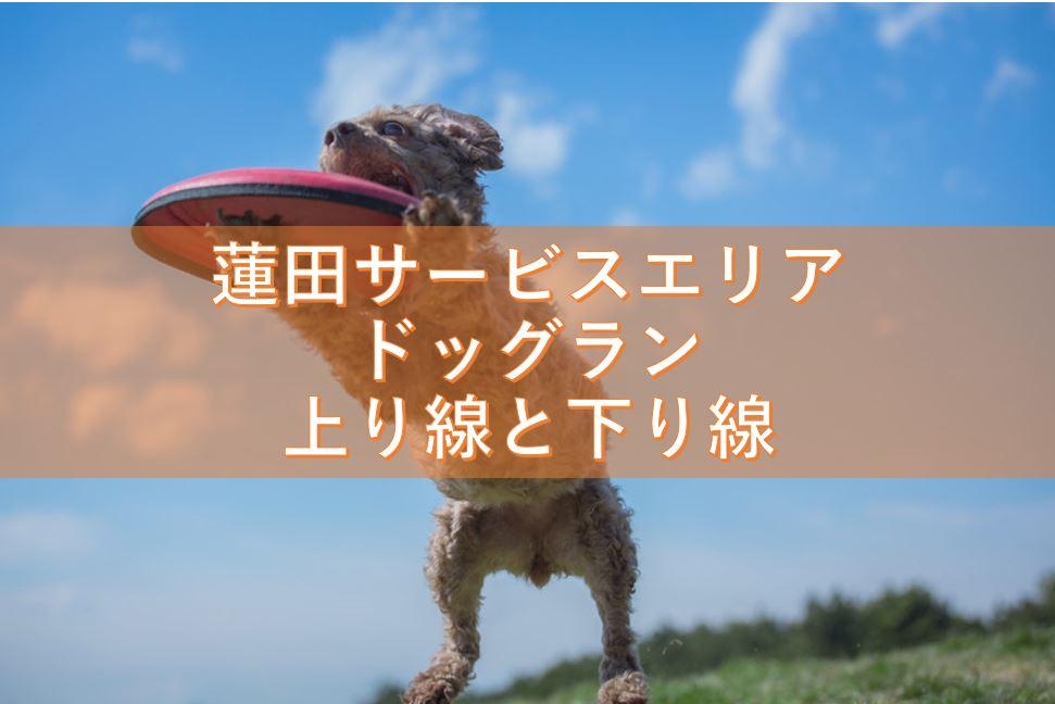 蓮田サービスエリアのドッグランの上り線と下り線について調査!