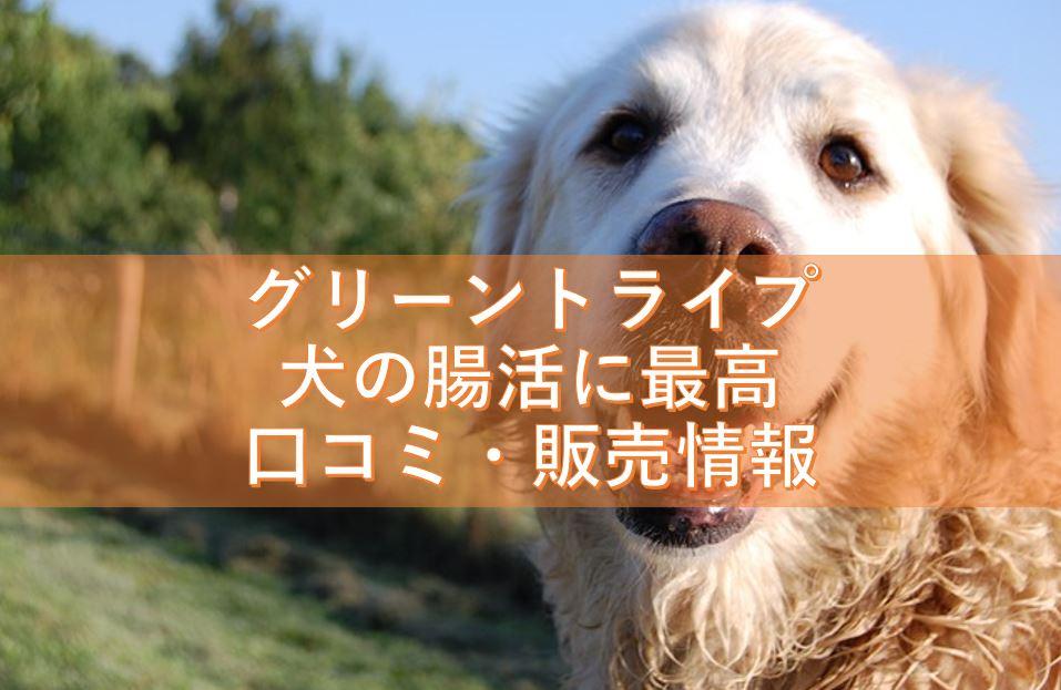 グリーントライプが犬の腸活に最高!口コミや販売情報はこちら!